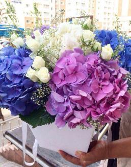 Bouquet of hydrangea | Flowers to women flowers