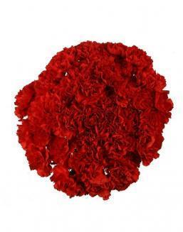 Bouquet of 51 red dianthus | Flowers inexpensive flowers
