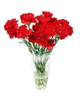 Bouquet of 15 red dianthus | 15 flowers flowers