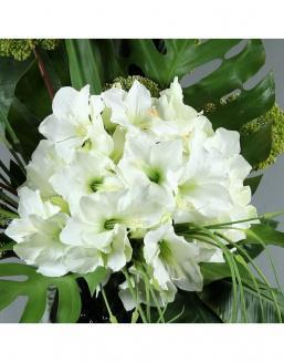 Bouquet of 25 white amariliss | 25 flowers flowers