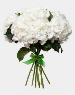 Bouquet of 25 white hydrangeas | 25 flowers flowers