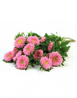 Bouquet of 25 pink asters | Asters flowers