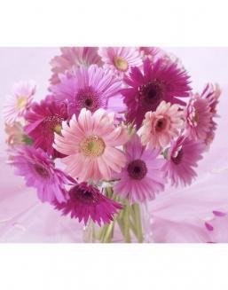 Bouquet of 51 pink asters | Asters flowers