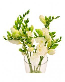 Bouquet of white freesia | Flowers to girlfriend flowers