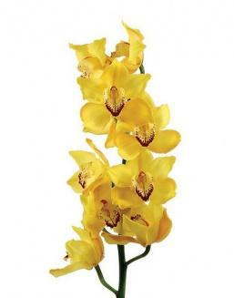 Bouquet of an orchid yellow | 15 flowers flowers
