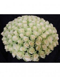 Bouquet of 101 white holland roses | Dutch roses flowers