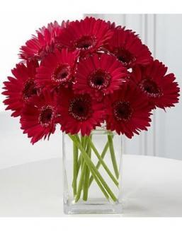 Bouquet of 15 red gerberas | Flowers on Knowledge Day