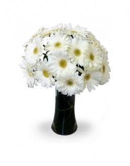 Bouquet of 25 white gerberas | Flowers on Knowledge Day