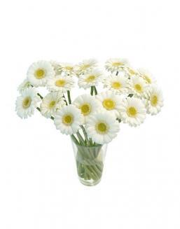 Bouquet of101 white gerberas | 101 flowers flowers