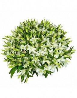 Bouquet of51 white lilies | White flowers flowers