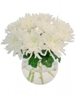 Bouquet of 15 white asters | Asters flowers