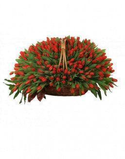 Basket 501 red tulips | 501 flowers on International Women's Day