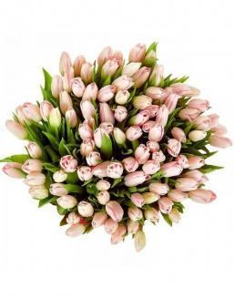 Bouquet 201 pink tulips | Flowers to girlfriend flowers