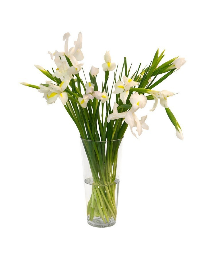 Bouquet of 15 white irises